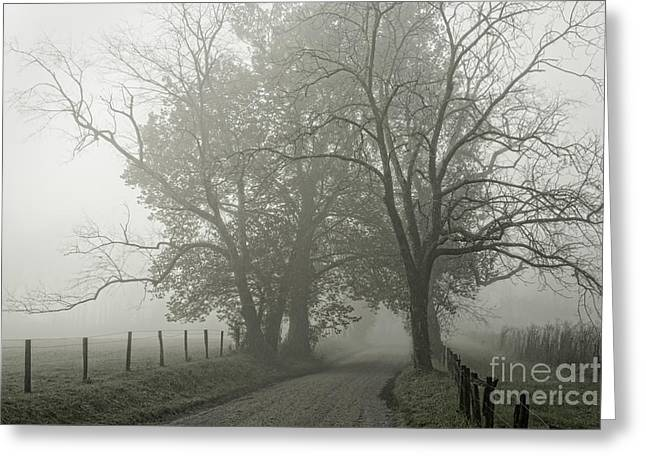 Sparks Lane Fog Greeting Card