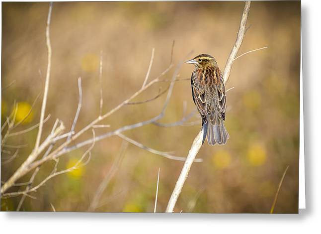 Sparrow In Marshland Greeting Card by Carolyn Marshall
