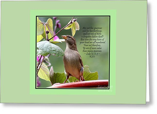 Sparrow Inspiration From The Book Of Luke Greeting Card by Catherine Sherman