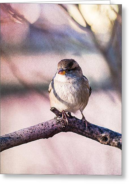 Sparrow - Jack Sparrow Greeting Card by Alexander Senin