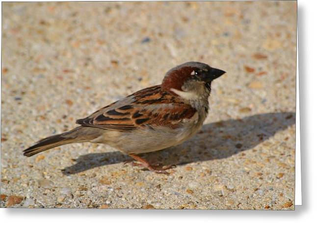 Greeting Card featuring the photograph Sparrow by Mary Zeman
