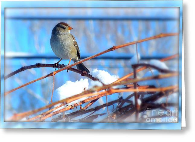 Greeting Card featuring the photograph Sparrow On Grapevine by Heidi Manly