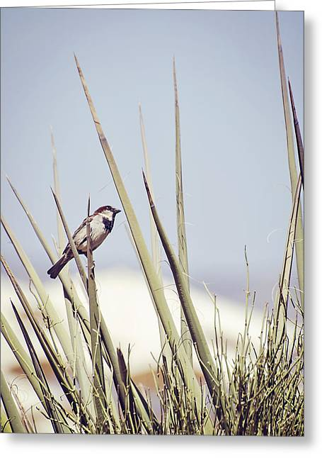 Sparrow On The Yucca Greeting Card by Heather Applegate