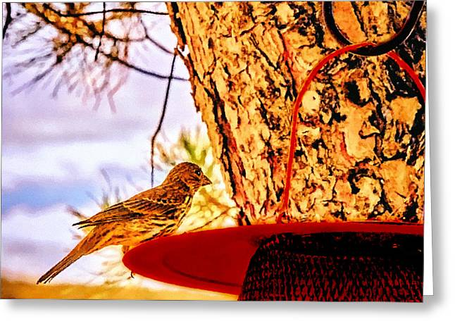 Sparrow Pine Tree Feeder Greeting Card by Bob and Nadine Johnston