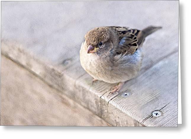 Sparrow - Takeoff Problems Greeting Card by Alexander Senin