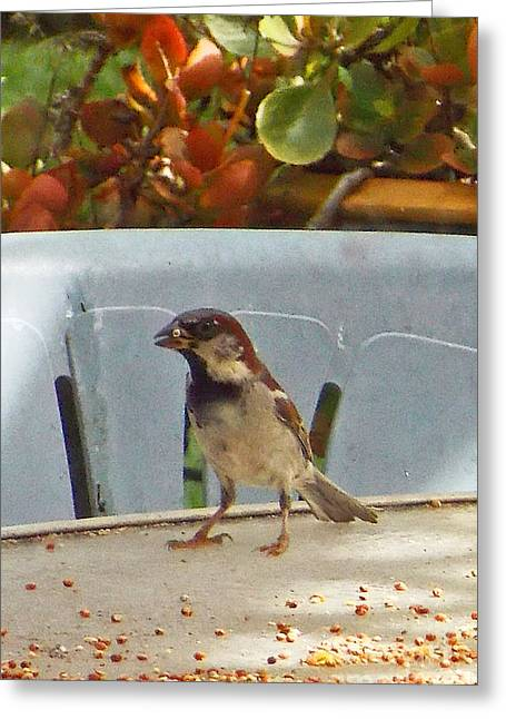 Sparrow's Breakfast Greeting Card by Fred Jinkins