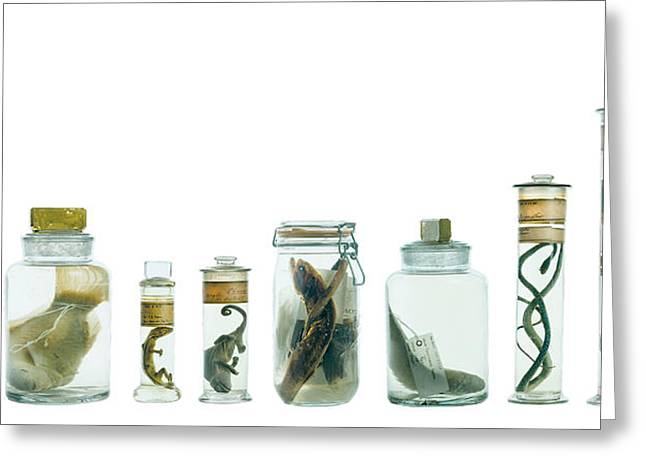 Specimens In Spirit Jars Greeting Card by Natural History Museum, London