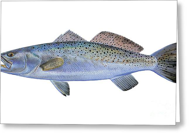 Speckled Trout Greeting Card by Carey Chen