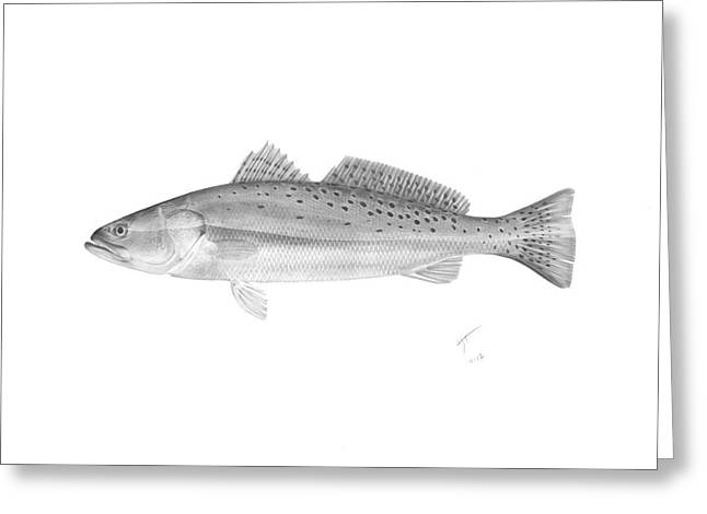 Speckled Trout - Scientific Greeting Card