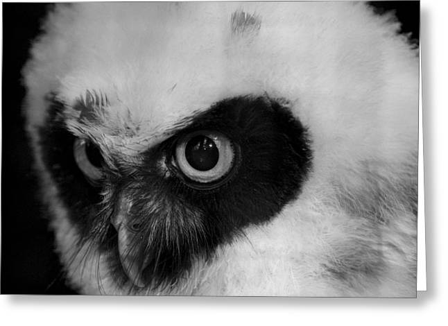 Spectacled Owl Greeting Card by Simon Gregory
