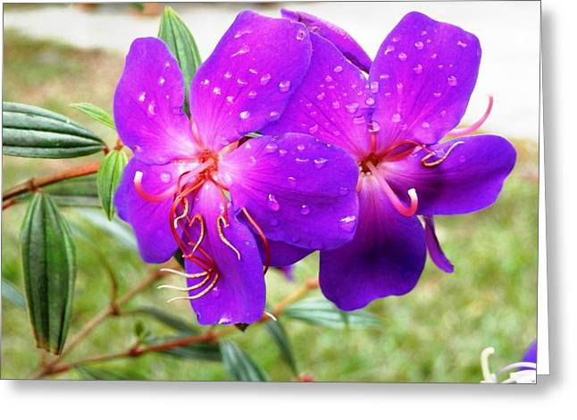 Spectacular Morning Dew Greeting Card by Belinda Lee