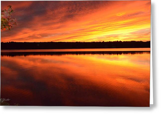 Greeting Card featuring the photograph Spectacular Orange Mirror by Cindy Greenstein