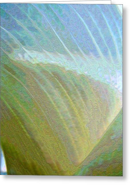 Spectrum Calla Lily  Greeting Card