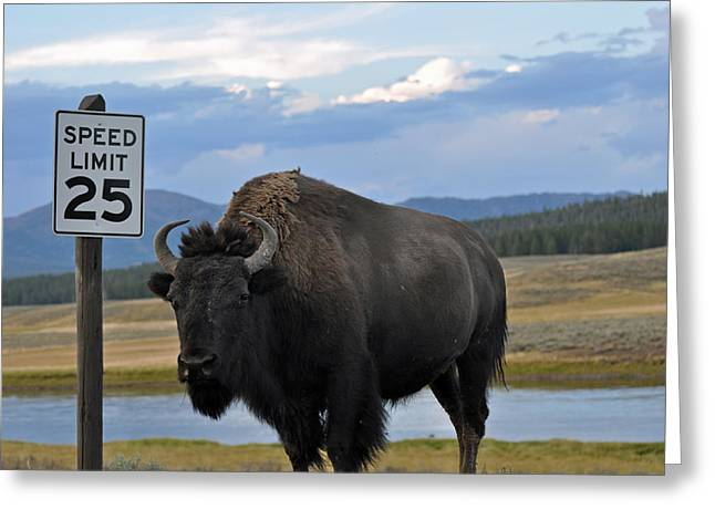 Speedy Bison In Yellowstone National Park Greeting Card by Bruce Gourley