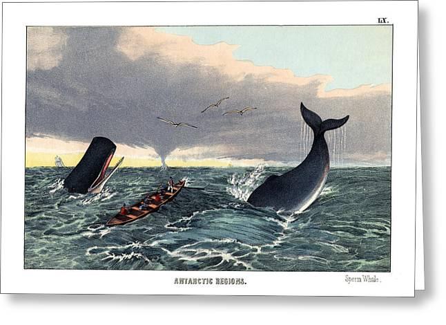 Sperm Whale Greeting Card by Splendid Art Prints