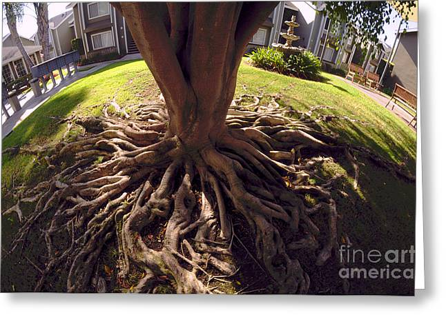 Greeting Card featuring the photograph Spherical Rooting by Clayton Bruster