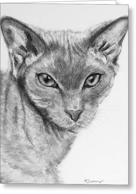 Sphynx Cat Drawing Greeting Card by Kate Sumners