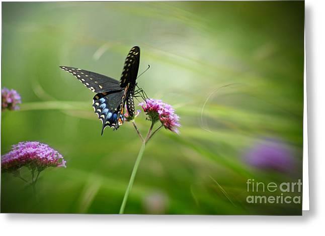 Spicebush Swallowtail Butterfly Greeting Card by Karen Adams