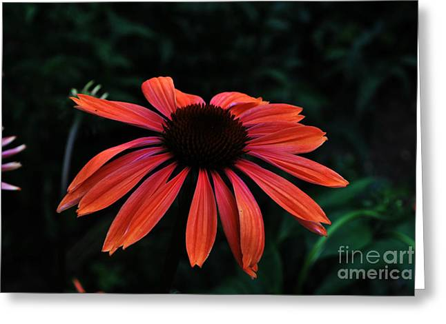 Greeting Card featuring the photograph Spicy by Judy Wolinsky
