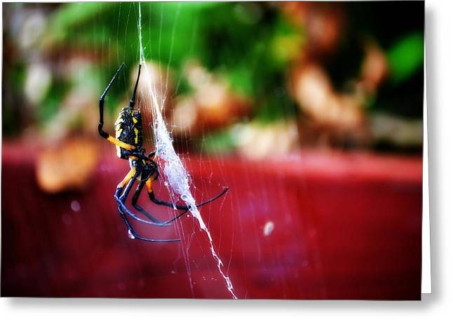 Spider And Web Greeting Card by Adam LeCroy
