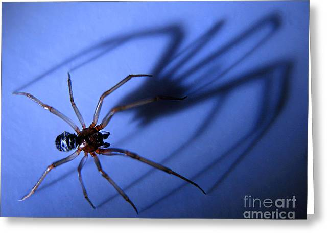 Spider Blue Greeting Card