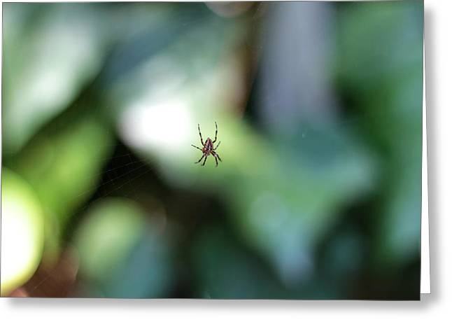 Spider Bokeh Greeting Card by Rick Starbuck