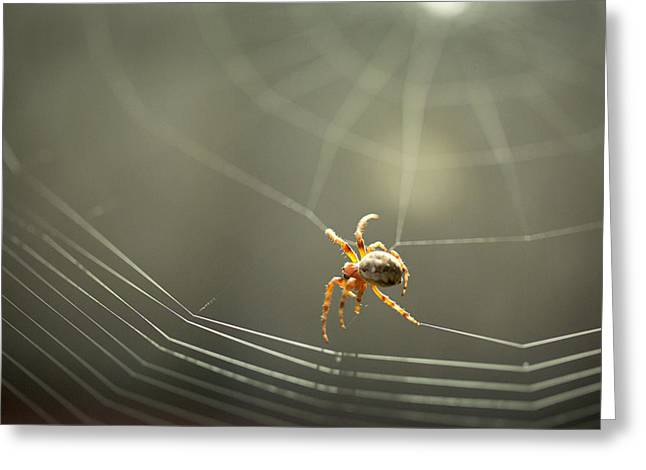 Spider Building His Web Greeting Card by Danielle Anderson
