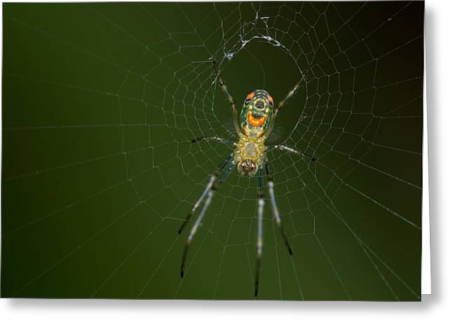 Spider In Mexico Greeting Card by Brian Magnier
