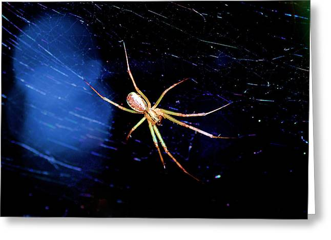 Spider In Web Greeting Card by Tommytechno Sweden
