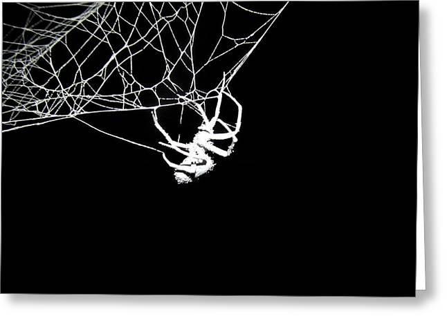 Greeting Card featuring the photograph Spider by Natasha Denger