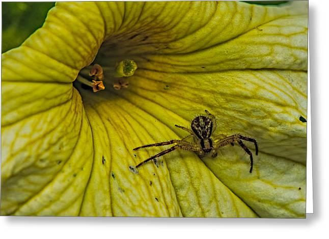 Spider On A Liliy Greeting Card by Paul Freidlund