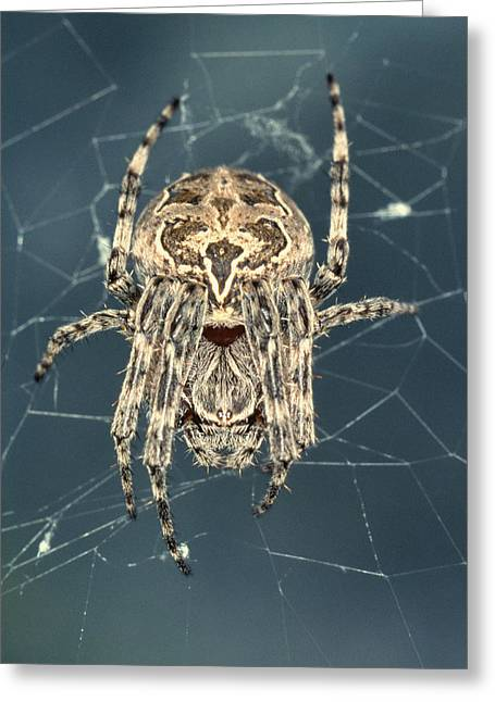 Spider Greeting Card by Sinclair Stammers/science Photo Library