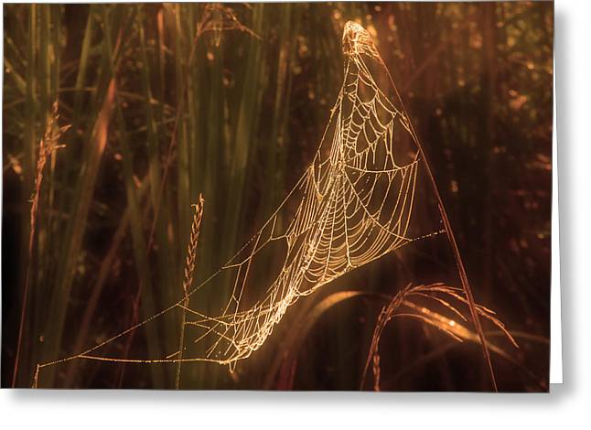 Spider Web A Greeting Card by Jim Vance