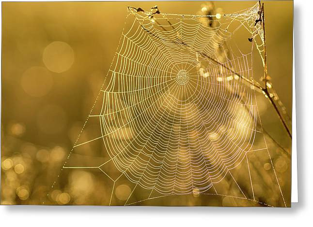 Spider Web, Indiantown, Florida Greeting Card by Rob Sheppard