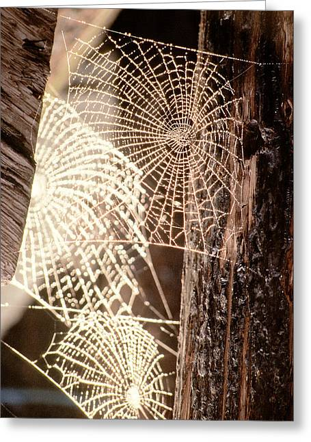Spider Webs Greeting Card by Anonymous