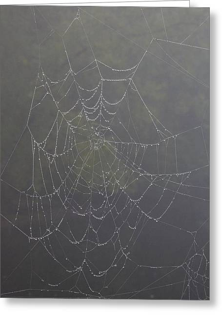 Spiderweb Greeting Card by Allan Morrison