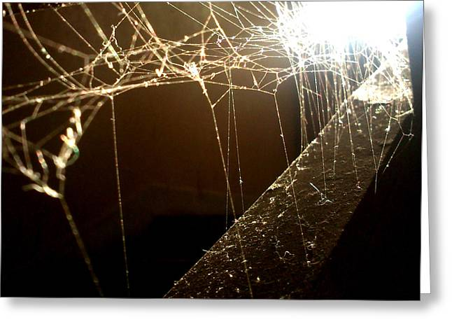 Spiderweb Greeting Card by Lucy D