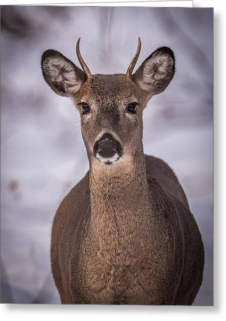 Spike Buck Greeting Card by Paul Freidlund