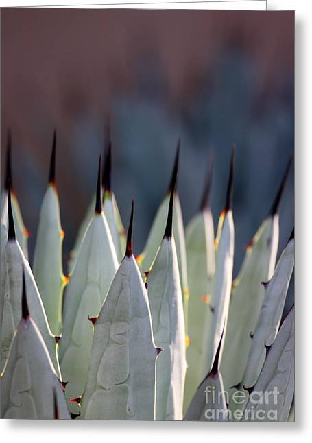 Spikes Greeting Card by Ruth Jolly