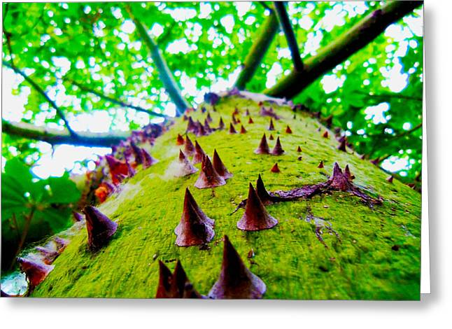 Spiketree Greeting Card by William  Dorsett