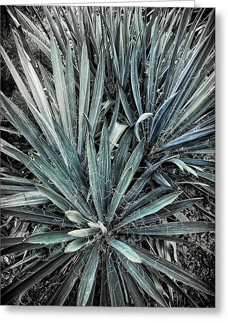 Spiky Blue-green Plant Greeting Card