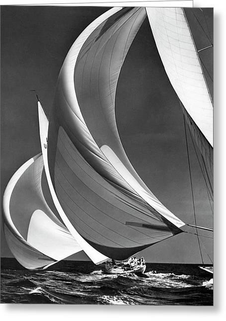 Spinakers On Racing Sailboats Greeting Card