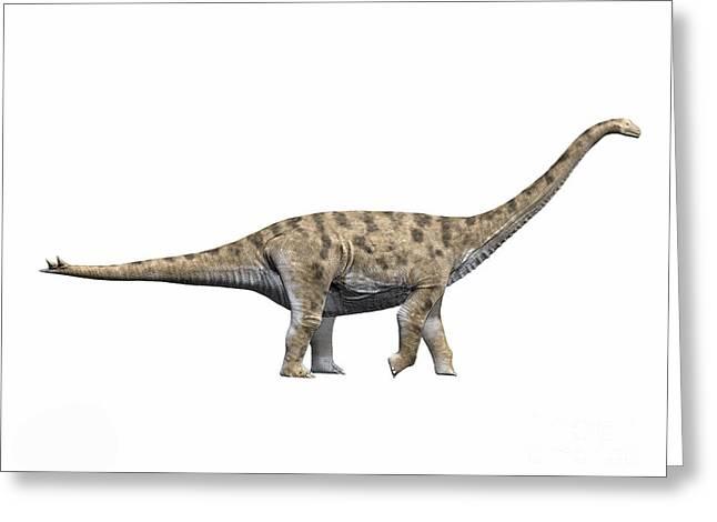 Spinophorosaurus Nigerensis, Middle Greeting Card by Nobumichi Tamura