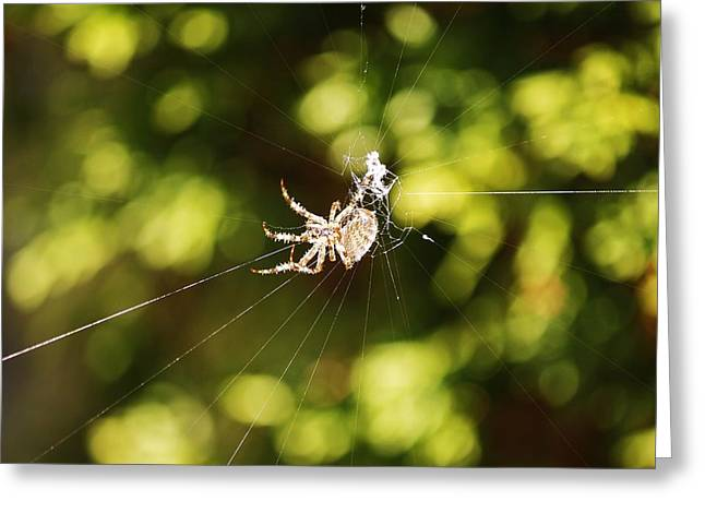 Greeting Card featuring the photograph Spins A Web by Al Fritz