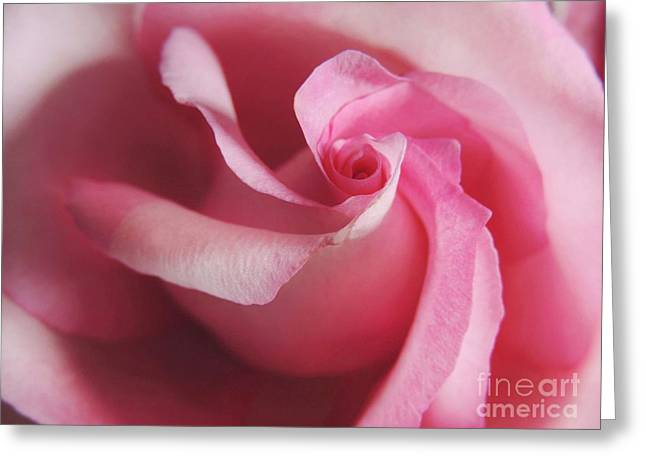 Spiral Rose Greeting Card