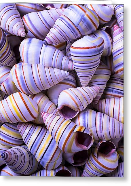 Spiral Sea Shells Greeting Card by Garry Gay