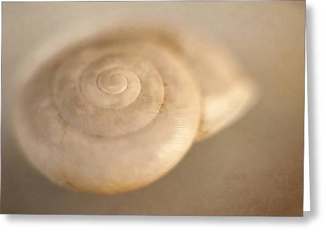 Spiral Shell 2 Greeting Card by Scott Norris