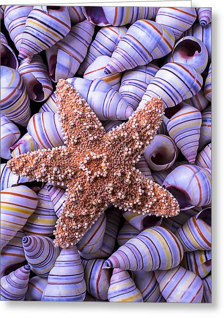 Spiral Shells And Starfish Greeting Card by Garry Gay