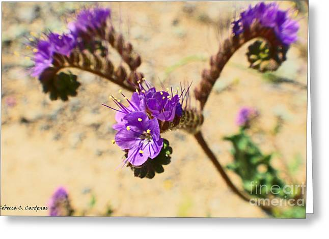 Spirals Of Lavender Greeting Card by Rebecca Christine Cardenas