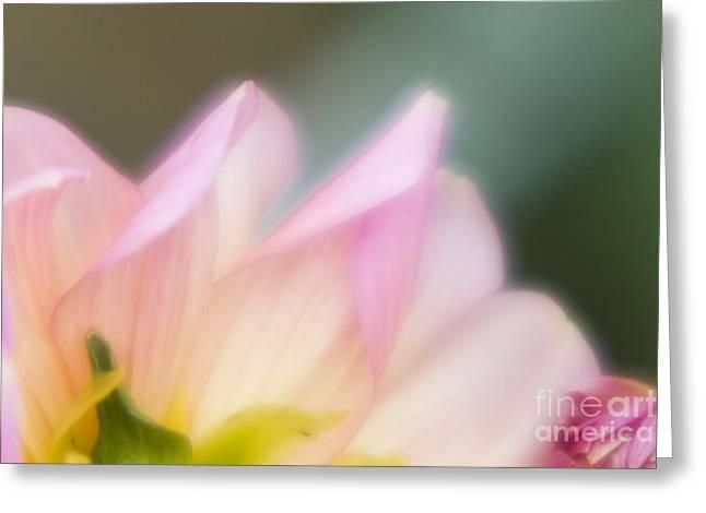 Spirit Of Flower Greeting Card by Tad Kanazaki